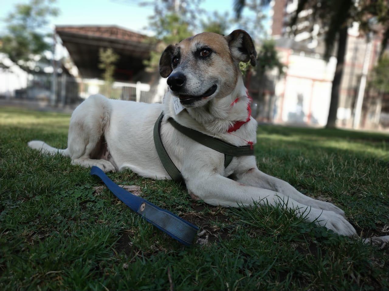 Consejos para sobrevivir en un paseo con tu perro